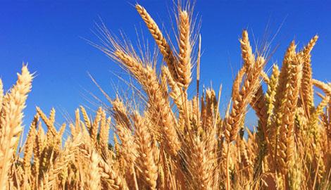 大农业要转型 背后的生意逻辑才是关键
